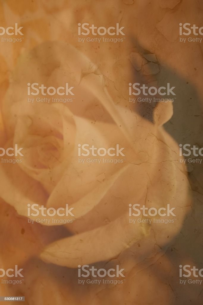 Enchanted Paper Rose Background stock photo