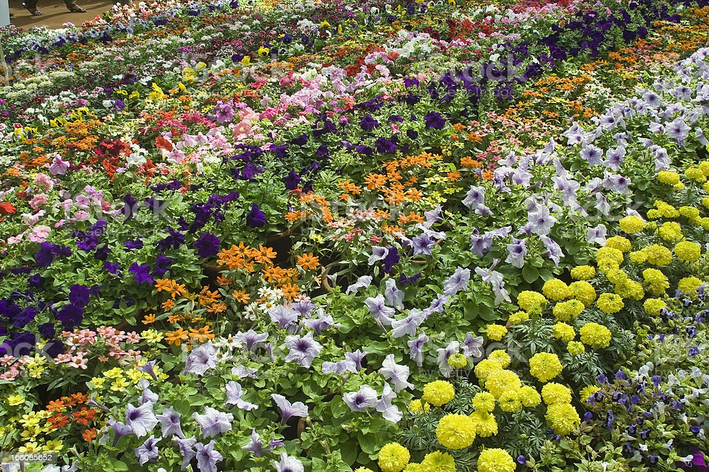 Enchanting Bed of Flowers stock photo