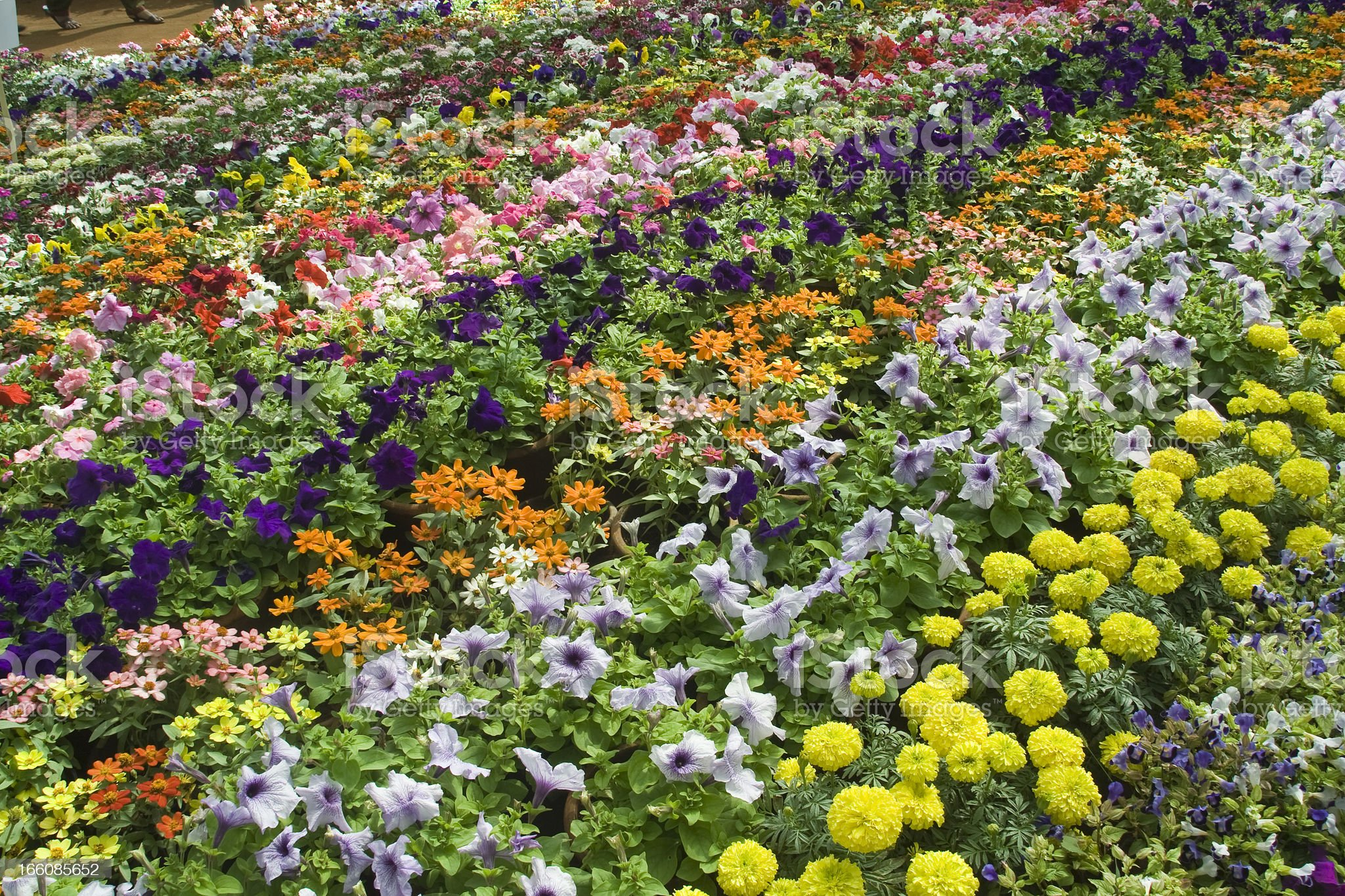 Enchanting Bed of Flowers royalty-free stock photo