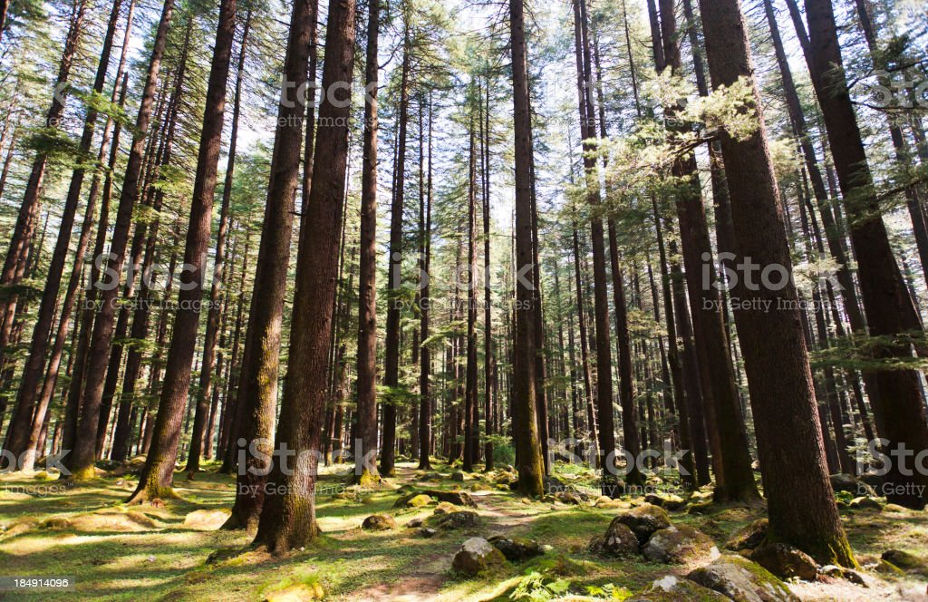Enchanting Forest in India stock photo