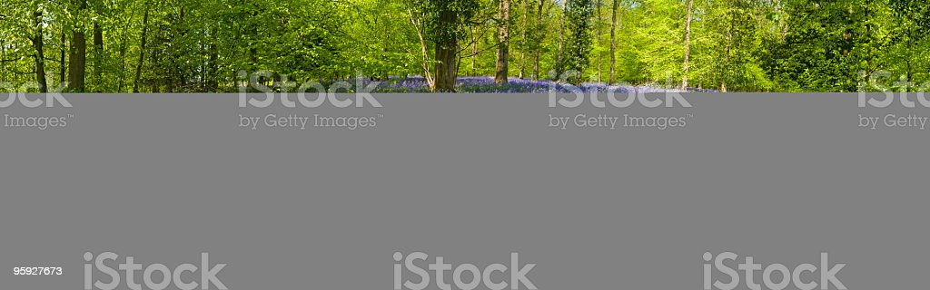 Enchanting forest wildflower glade royalty-free stock photo