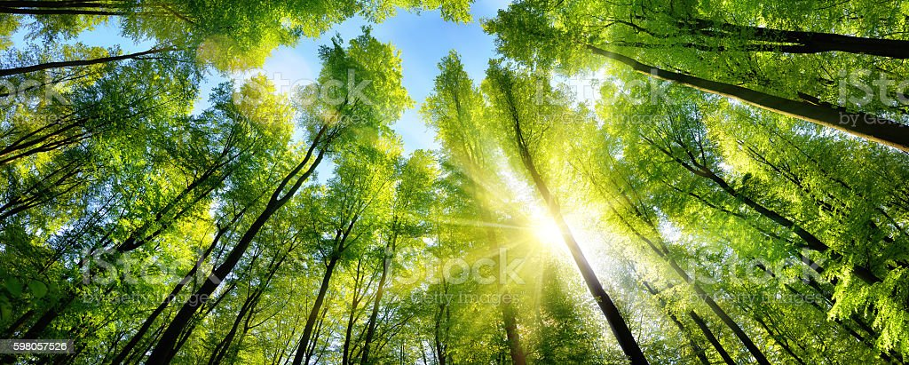 Enchanting sunshine on green treetops stock photo