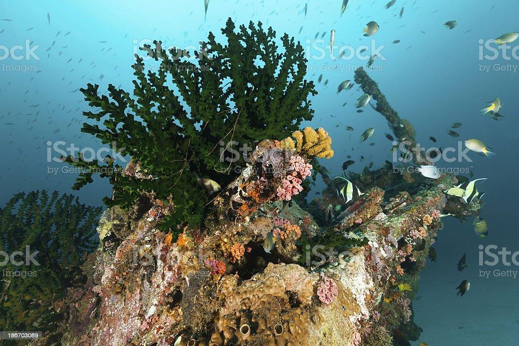 Encrusted Stern of Ship Wreck near Manokwari, Cenderawasih Bay, Indonesia stock photo