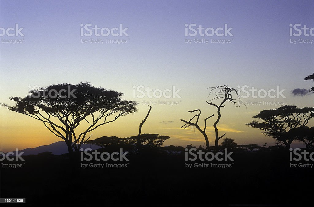 End of a Safari-day in the Serengeti (5) stock photo