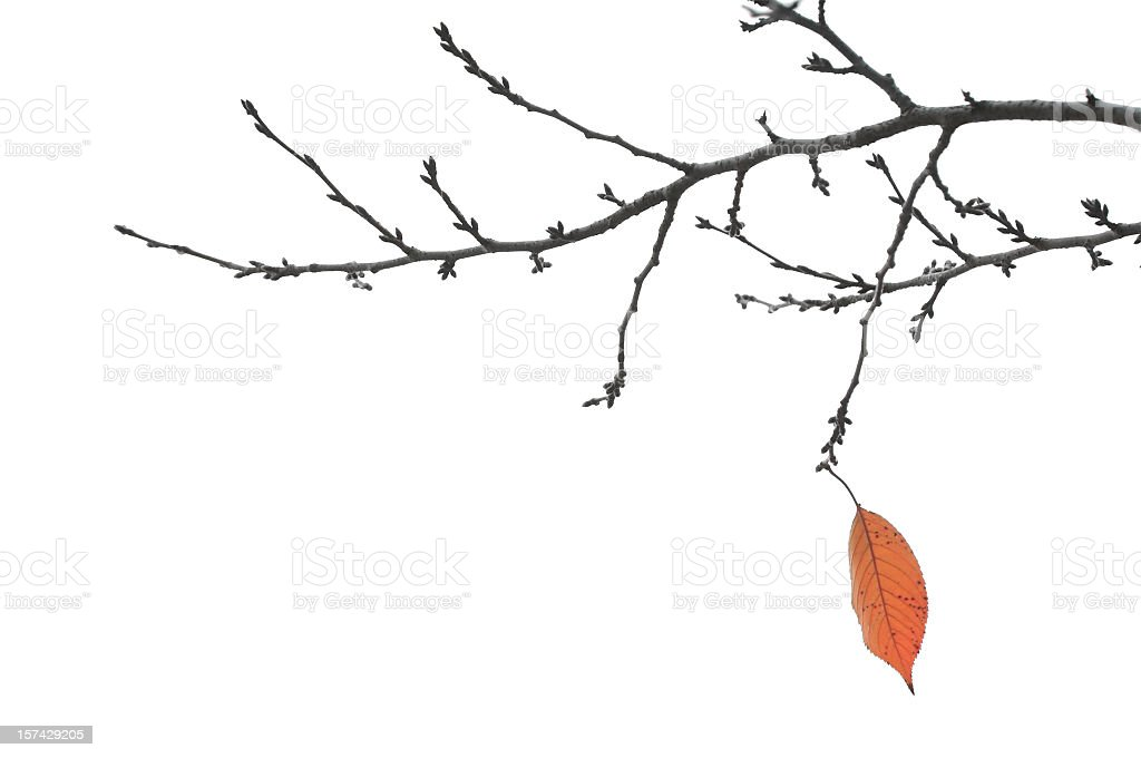 End Of Autumn - Final Leaf on a Branch stock photo