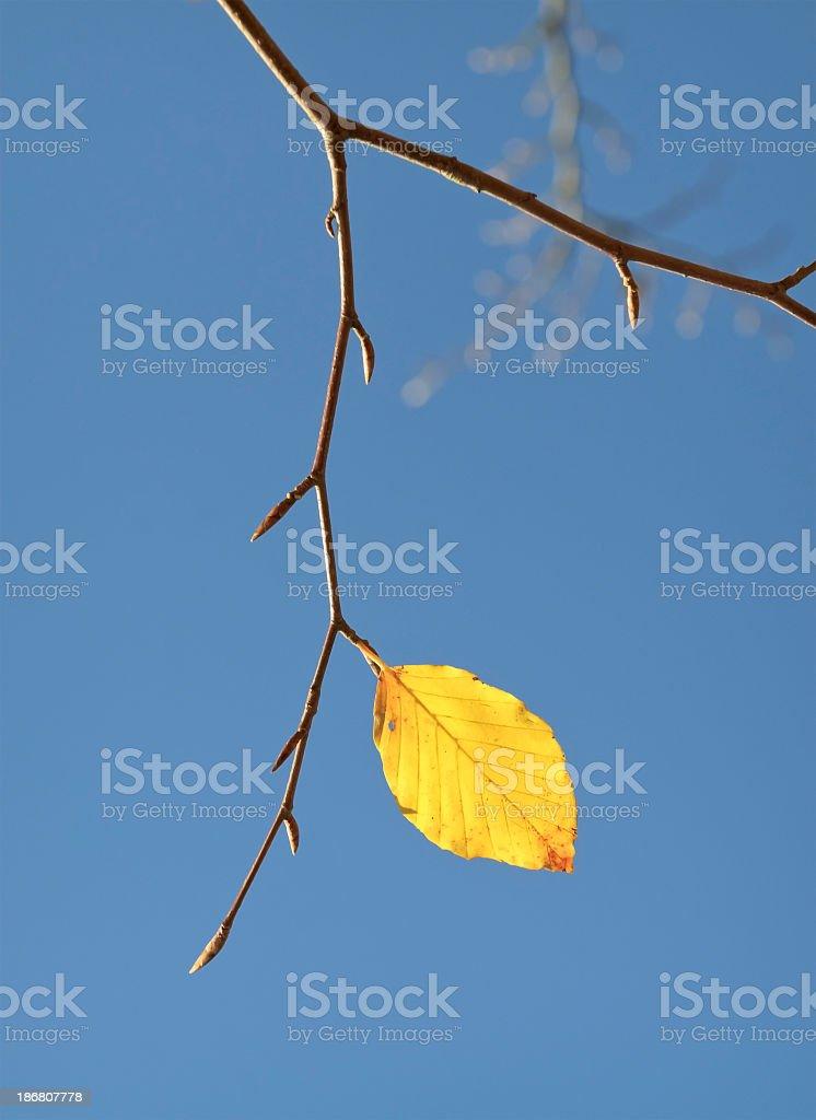 End of Autumn stock photo