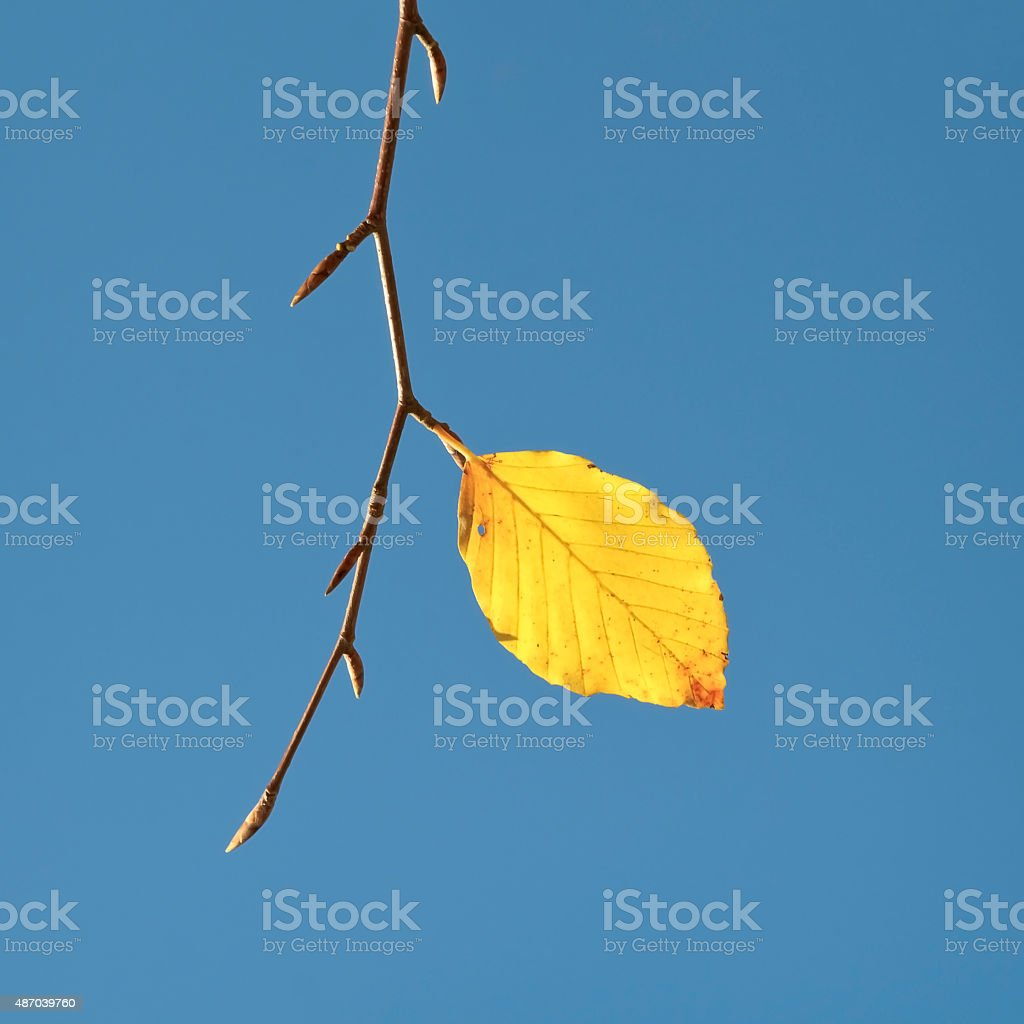 End of Autumn stock photo
