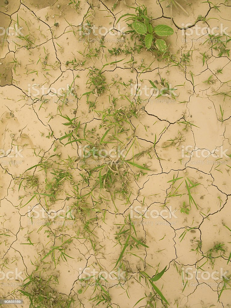 End of Drought royalty-free stock photo