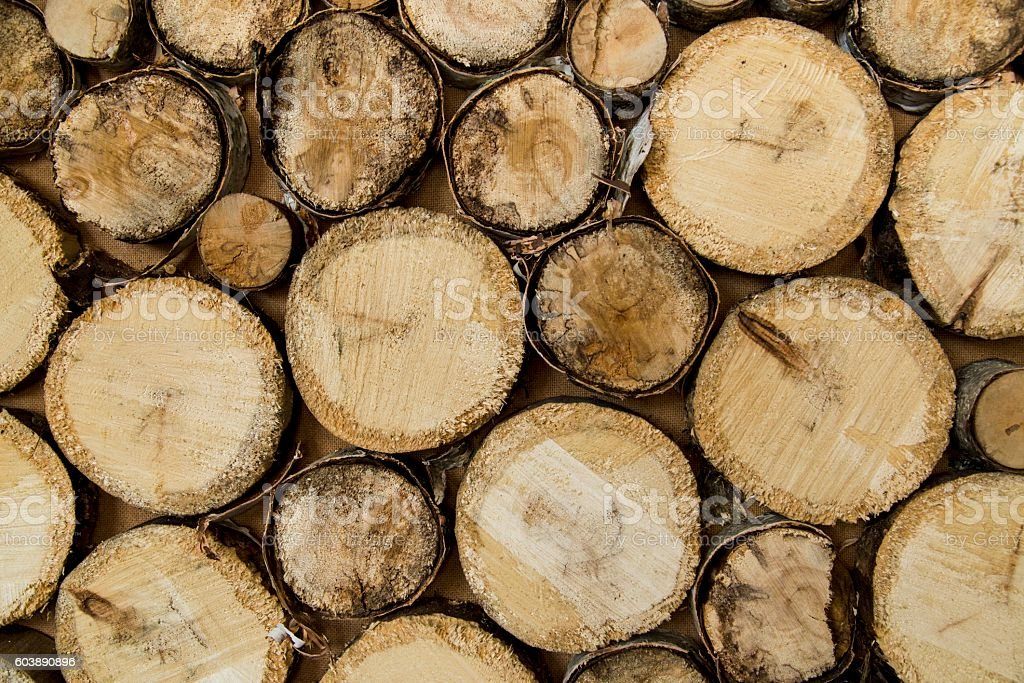 end of old logs, decor  wall stock photo