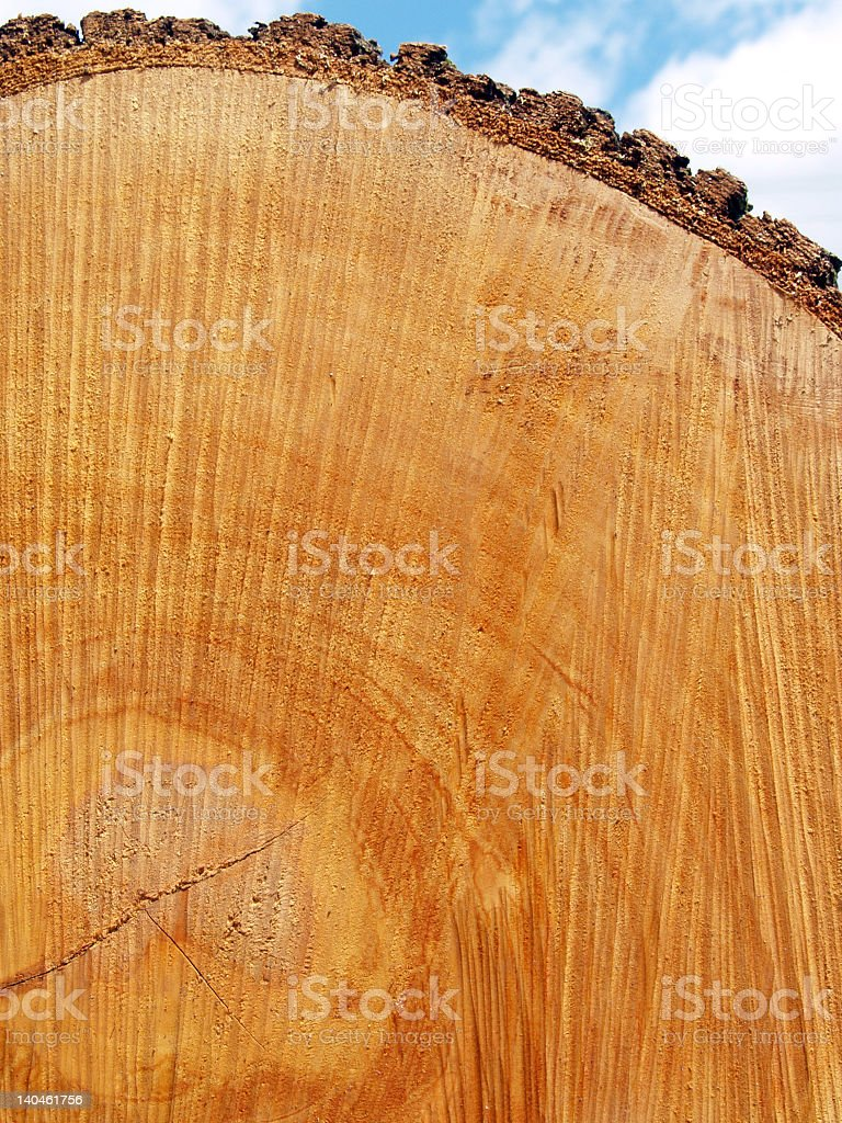End of Red Oak Log with Saw Marks, Growth Rings royalty-free stock photo