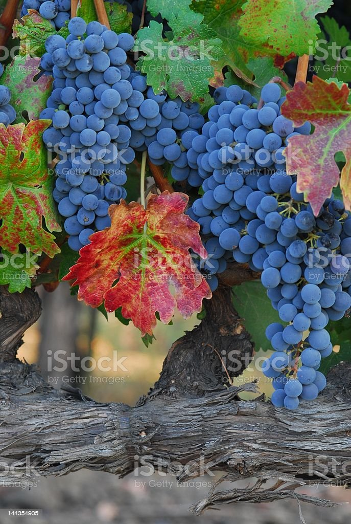 End of summer in Napa royalty-free stock photo