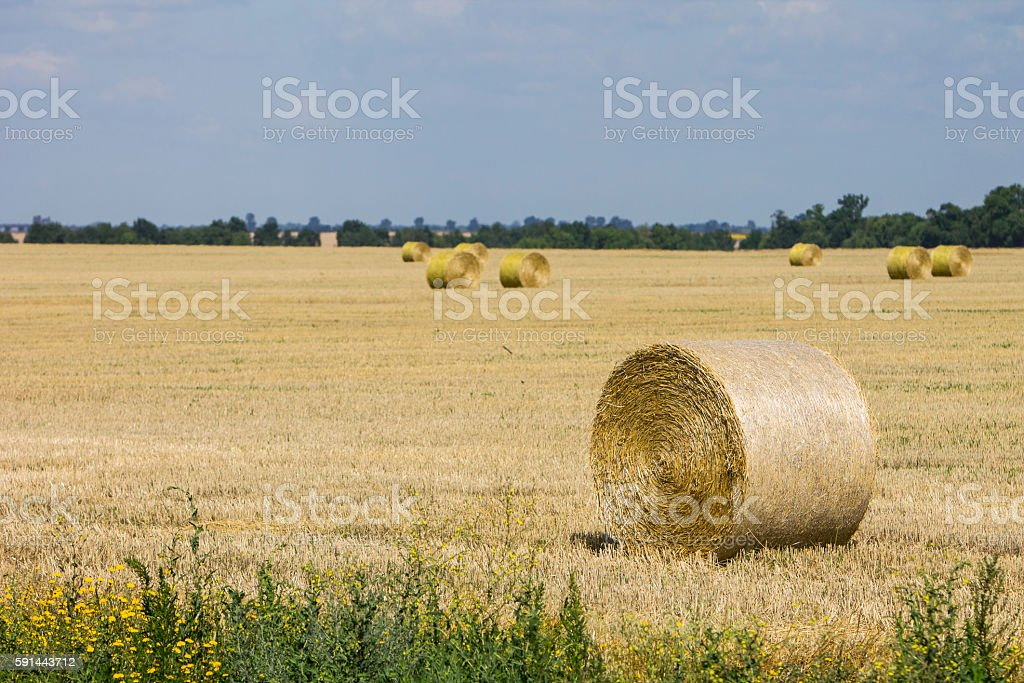 end of the summer. Harvest in the village stock photo