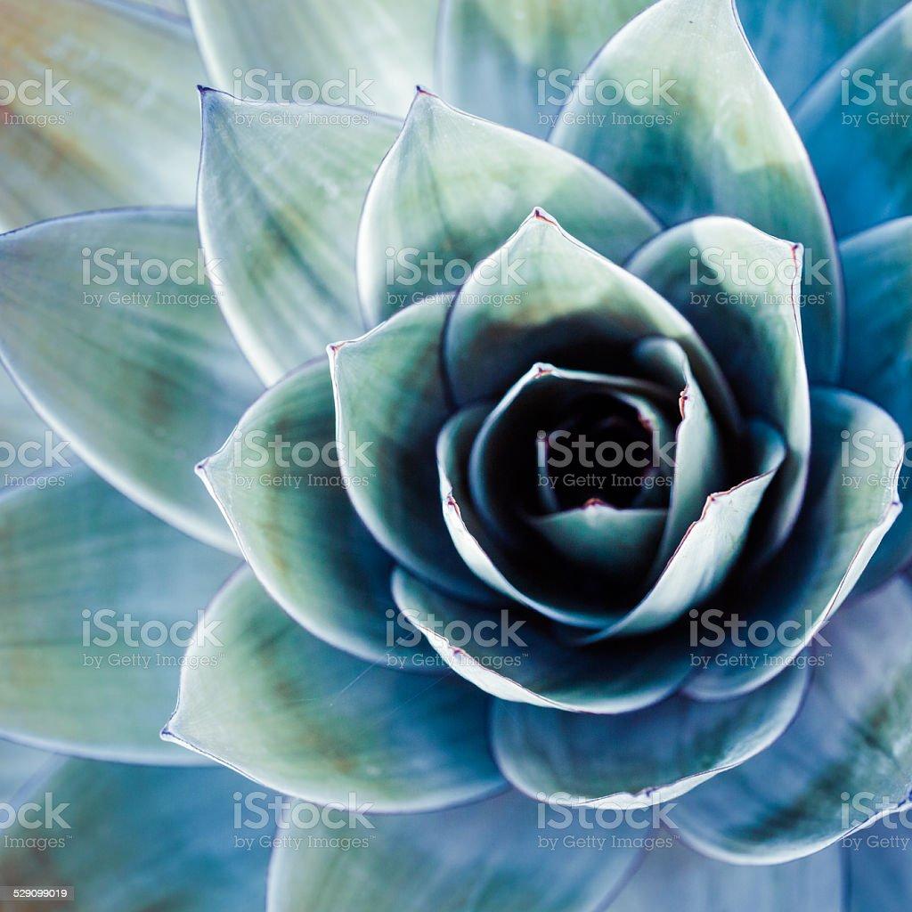 Endemic plant from Mount Roraima in Venezuela stock photo