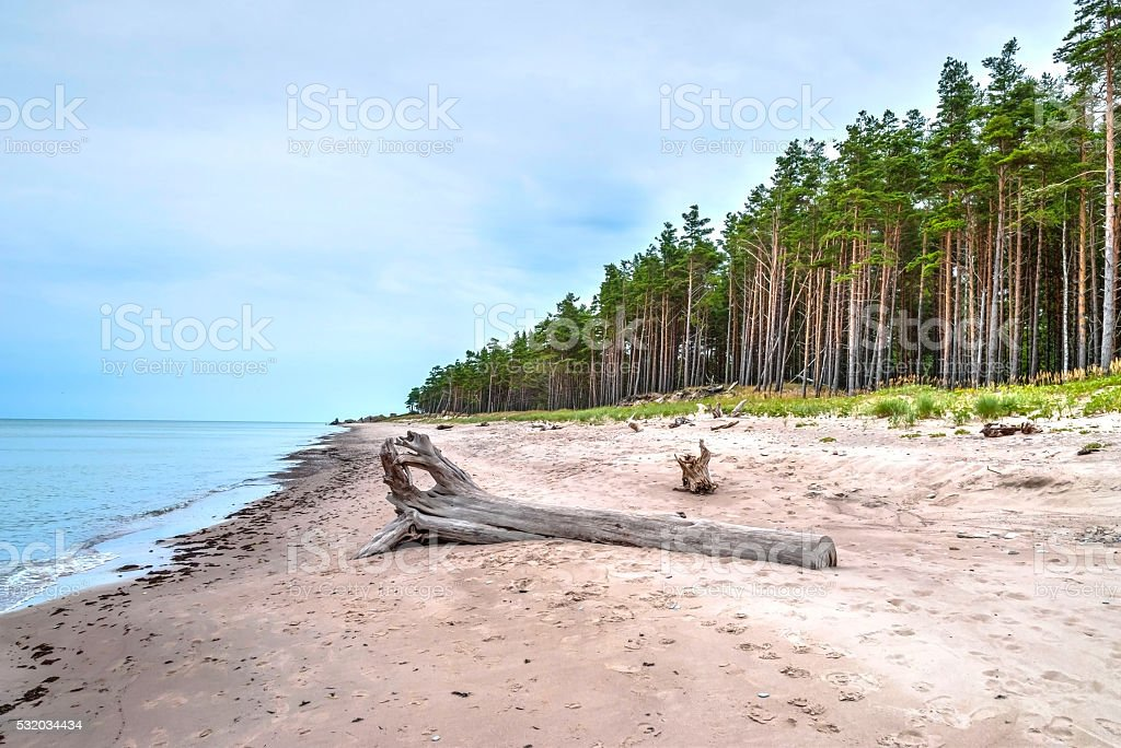 Endless coastline with forest stock photo