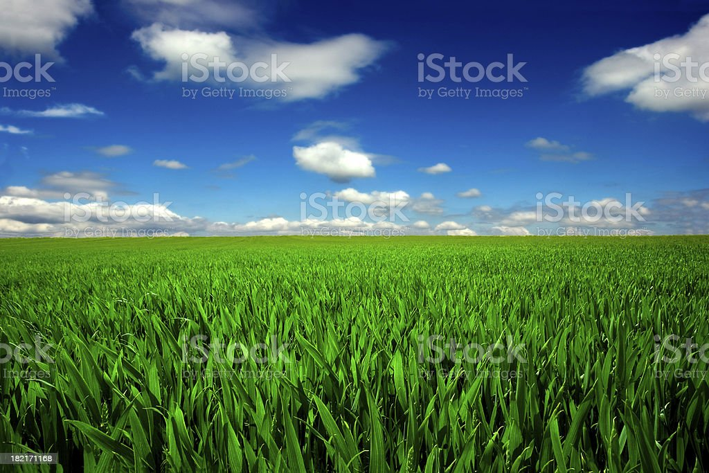 Endless field stock photo