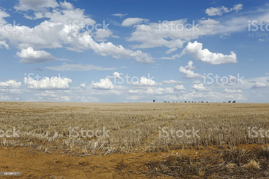 Endless field stock photo