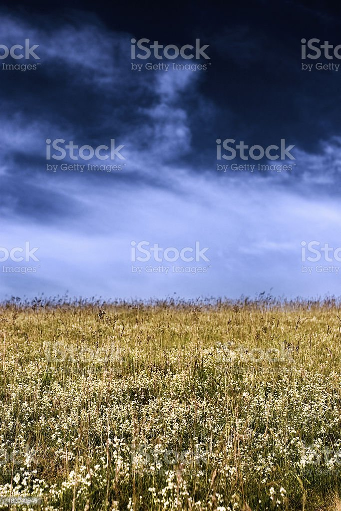 Endless Grassland stock photo