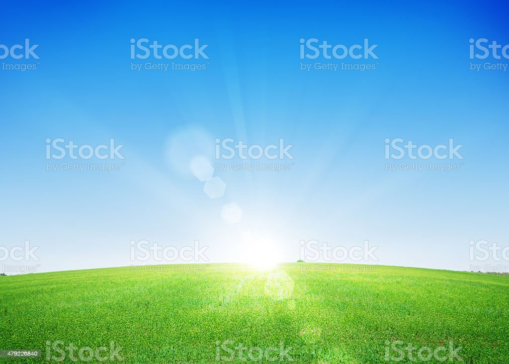 Endless green grass field and deep blue sky stock photo