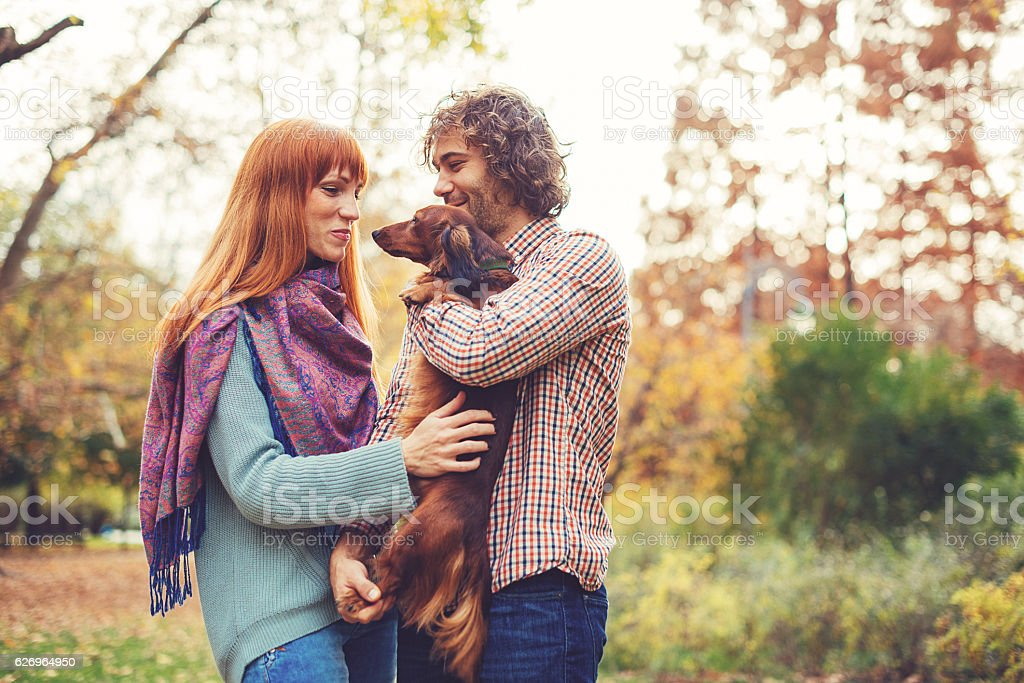Endless love for brown dachshund in park stock photo