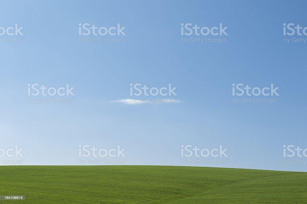 Endless meadow royalty-free stock photo
