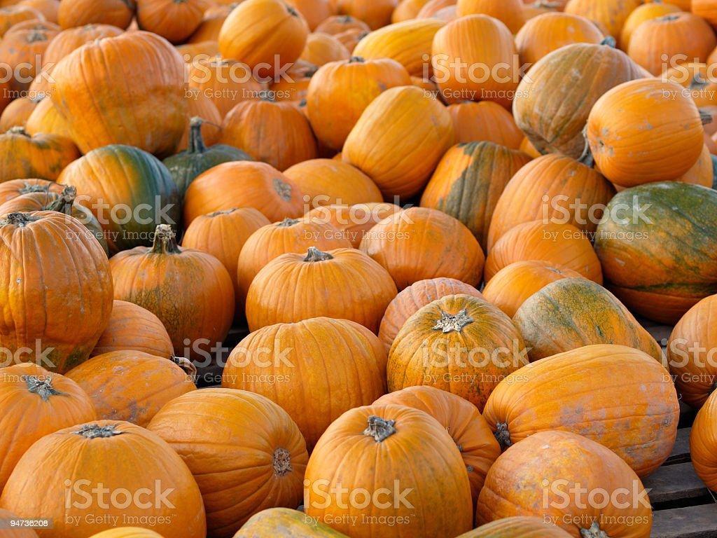 endless pumpkins royalty-free stock photo