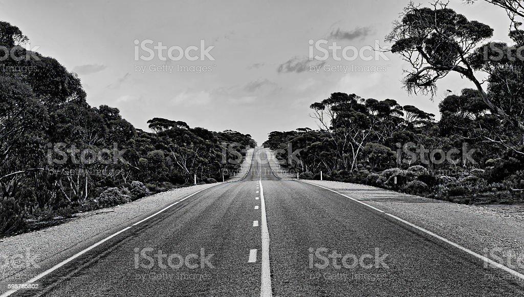 SA Endless road trees stock photo