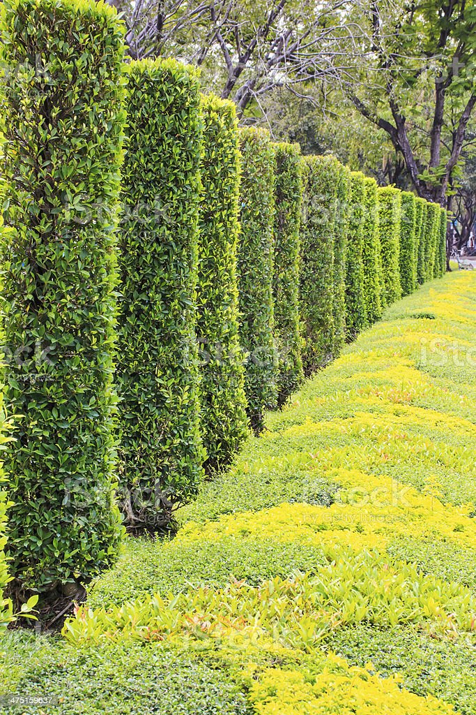 Endless Seamless Pattern, Tall Hedge and Grass. stock photo