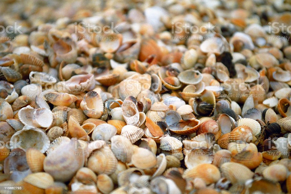 Endless Seashells royalty-free stock photo