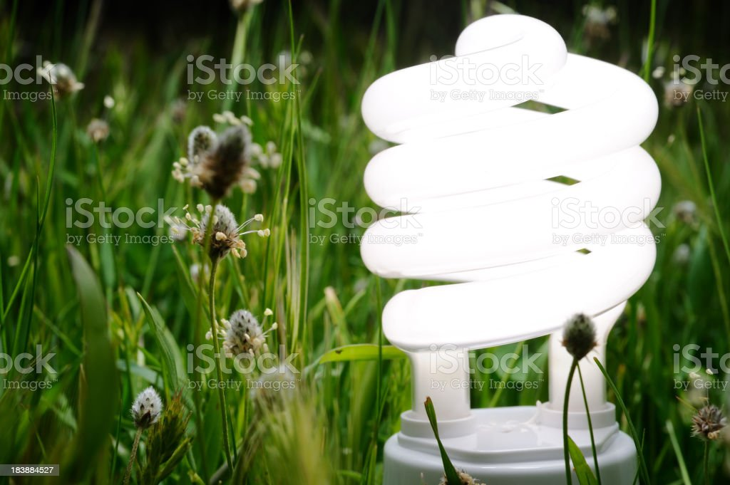 Energy saving light bulb in nature royalty-free stock photo