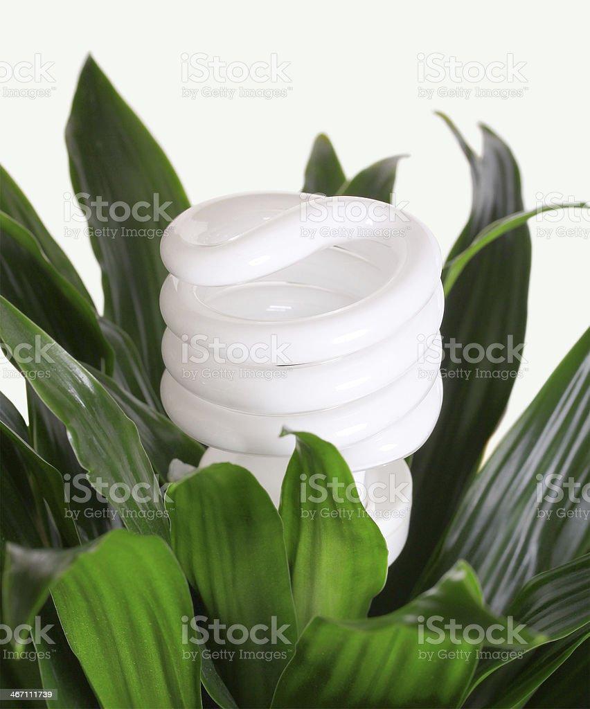 Energy saving light bulb on green plant royalty-free stock photo