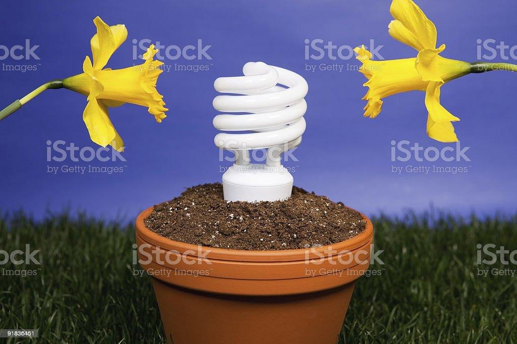 Energy saving light bulb planted royalty-free stock photo