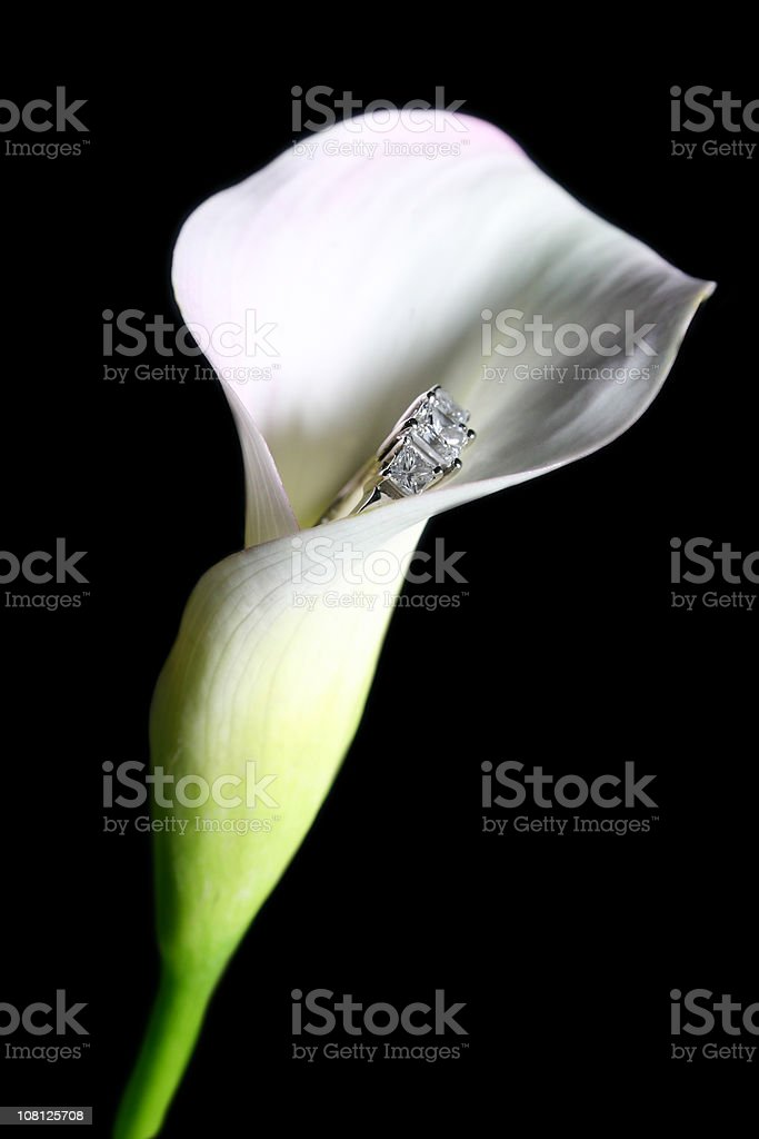 Engagement Calla Lily royalty-free stock photo