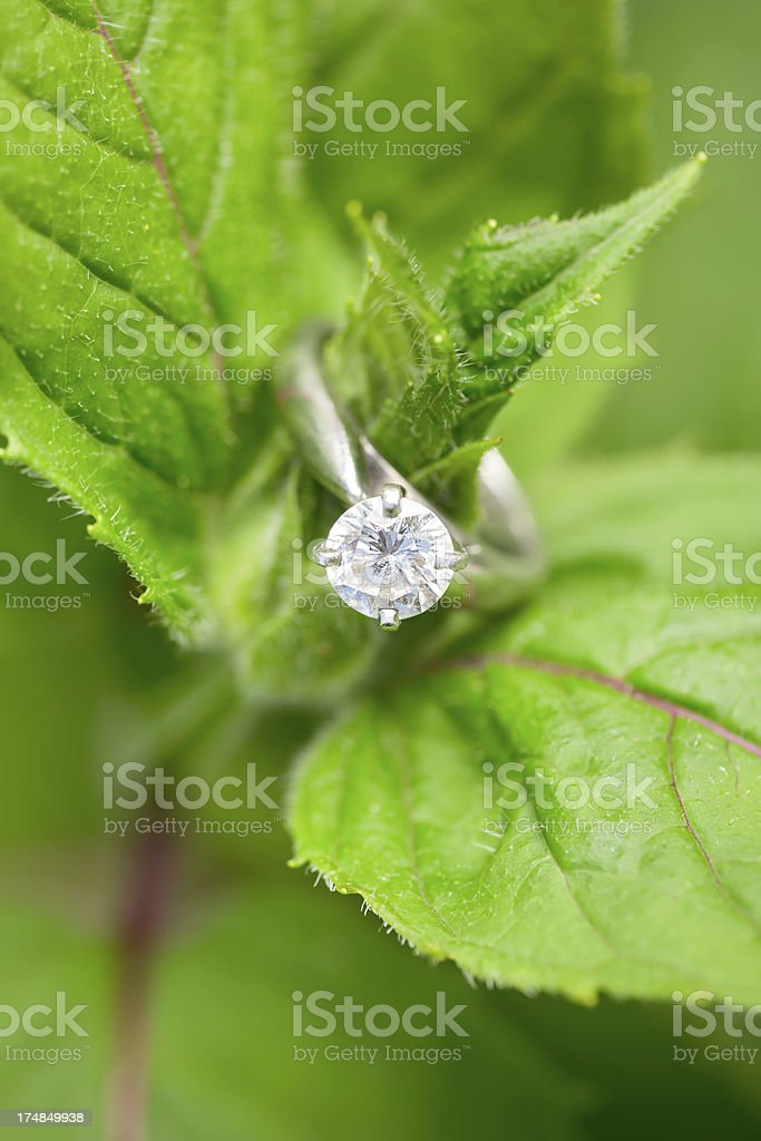 Engagement ring on green leaves royalty-free stock photo