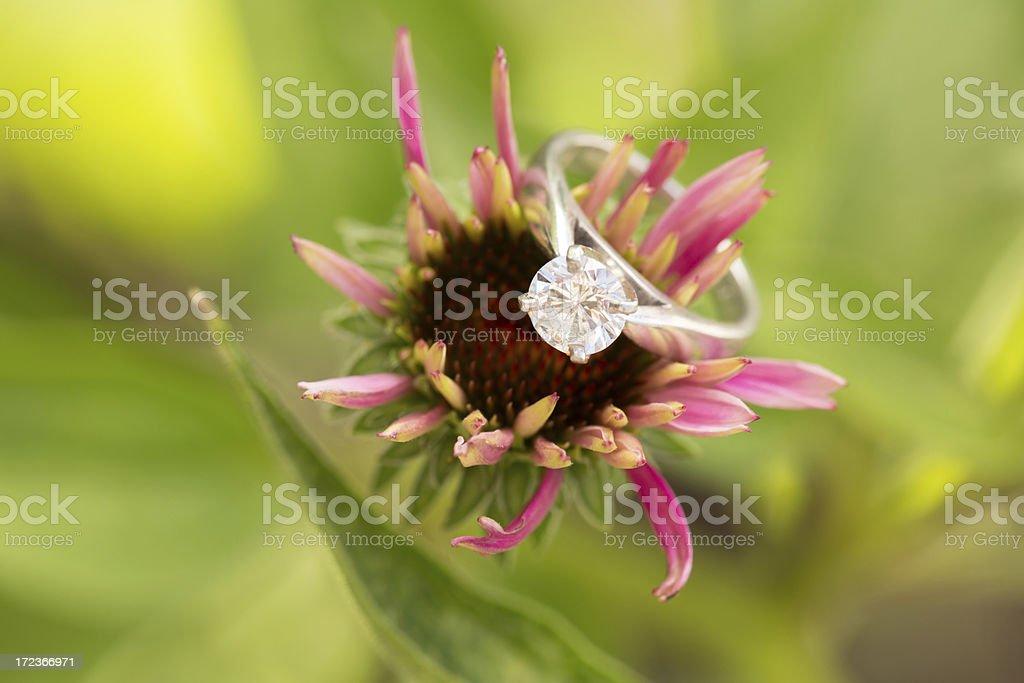 Engagement ring on purple cornflower stock photo