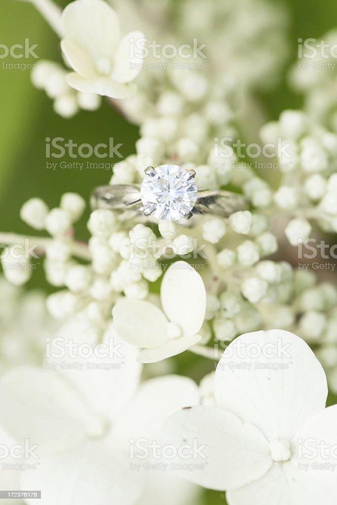 Engagement ring on white Hydrangea royalty-free stock photo