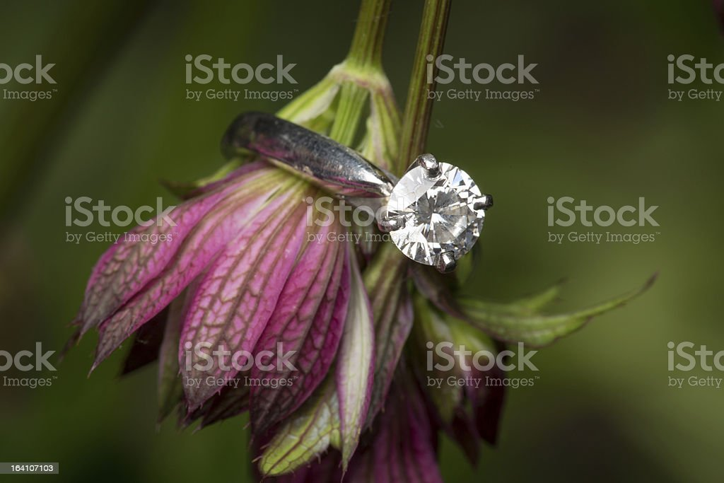 Engagment ring on purple flowers stock photo