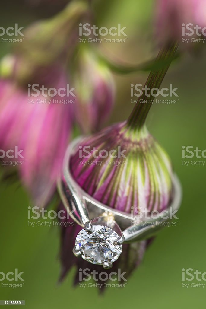 Engagment ring on purple flowers royalty-free stock photo