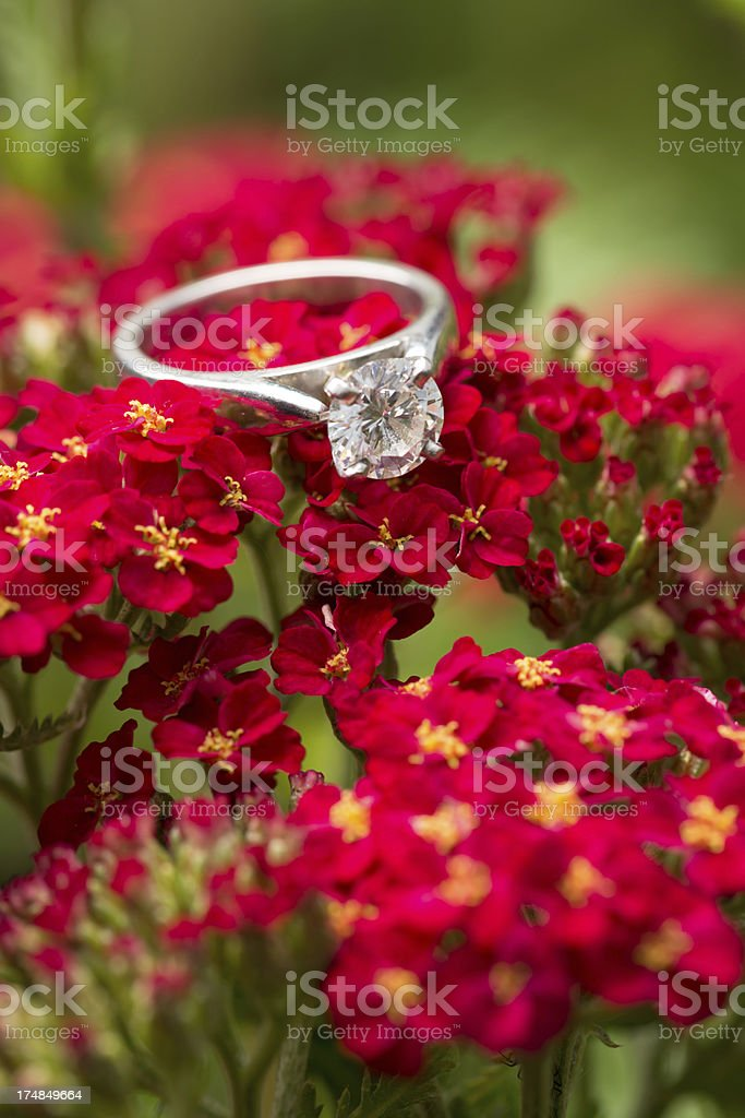 Engagment ring on red Yarrow royalty-free stock photo