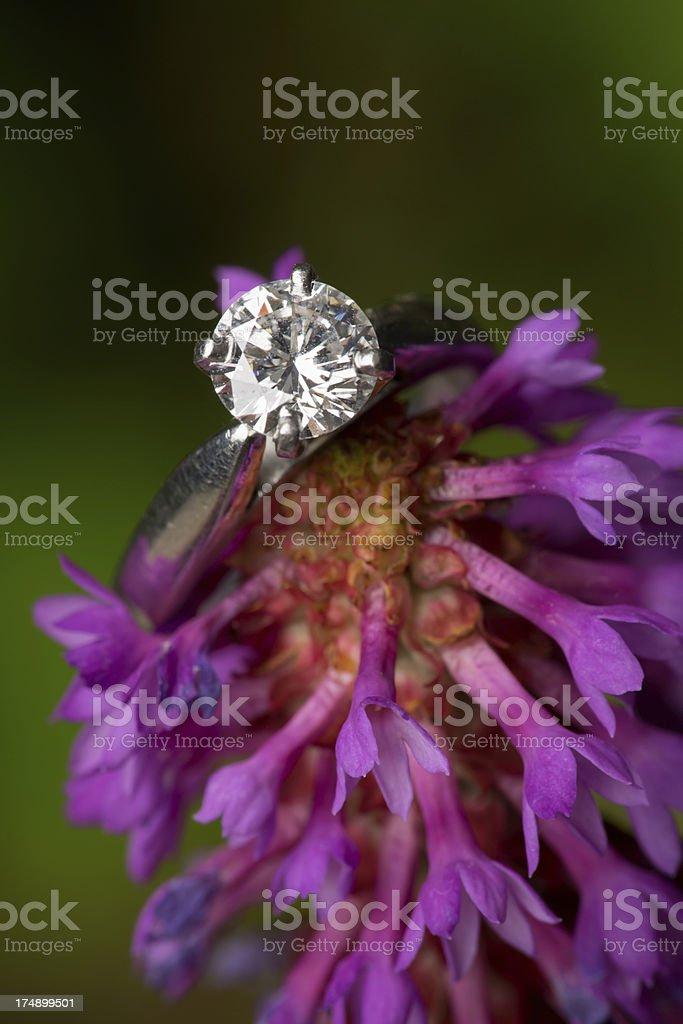 Engagment ring spike primrose royalty-free stock photo