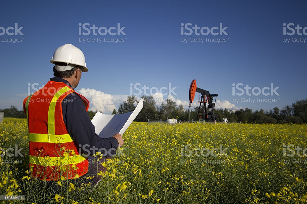Engineer in Canola stock photo