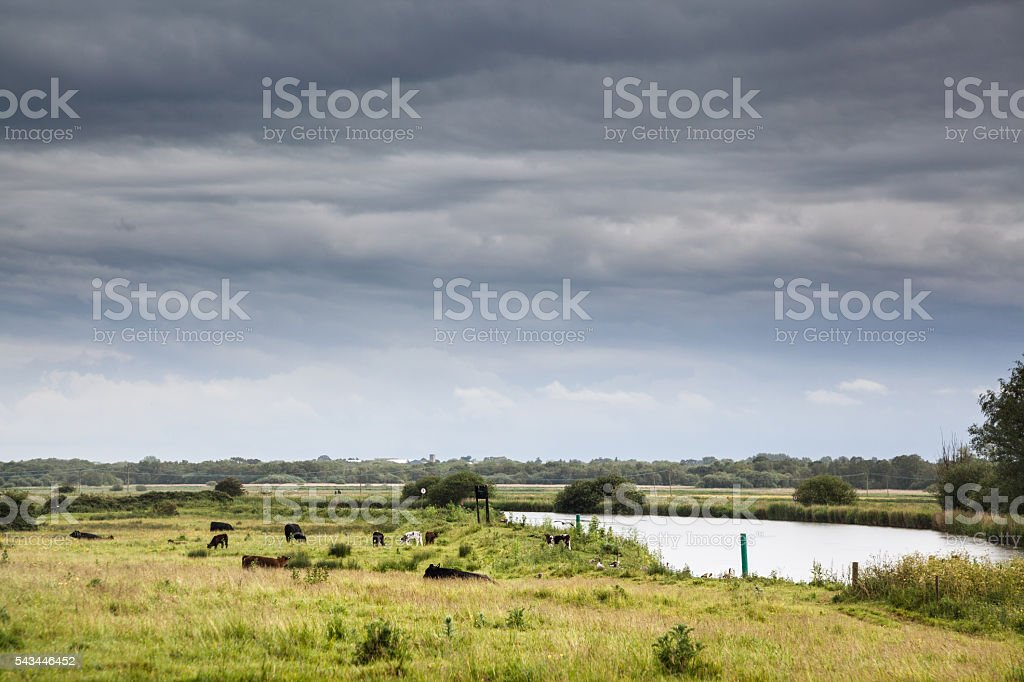England norfolk broads river with cows and stormy sky stock photo
