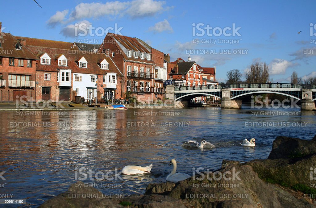 England: Swans in Windsor stock photo