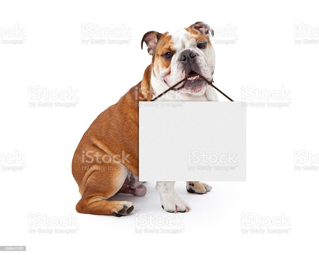 English Bulldog Holding Blank Sign stock photo
