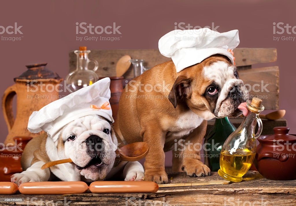 english Bulldog puppies in chef's hat stock photo