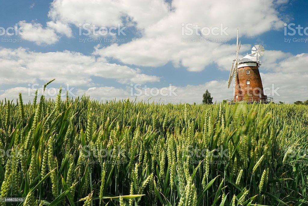 English cornfield stock photo