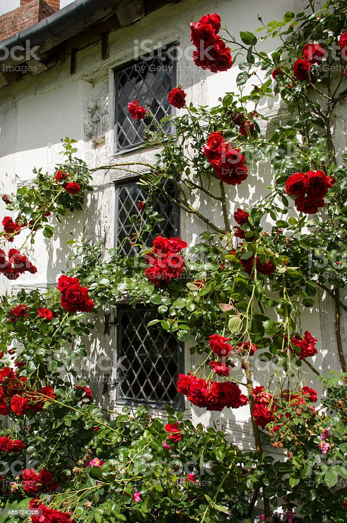 English Cottage with Roses Leaded Window stock photo