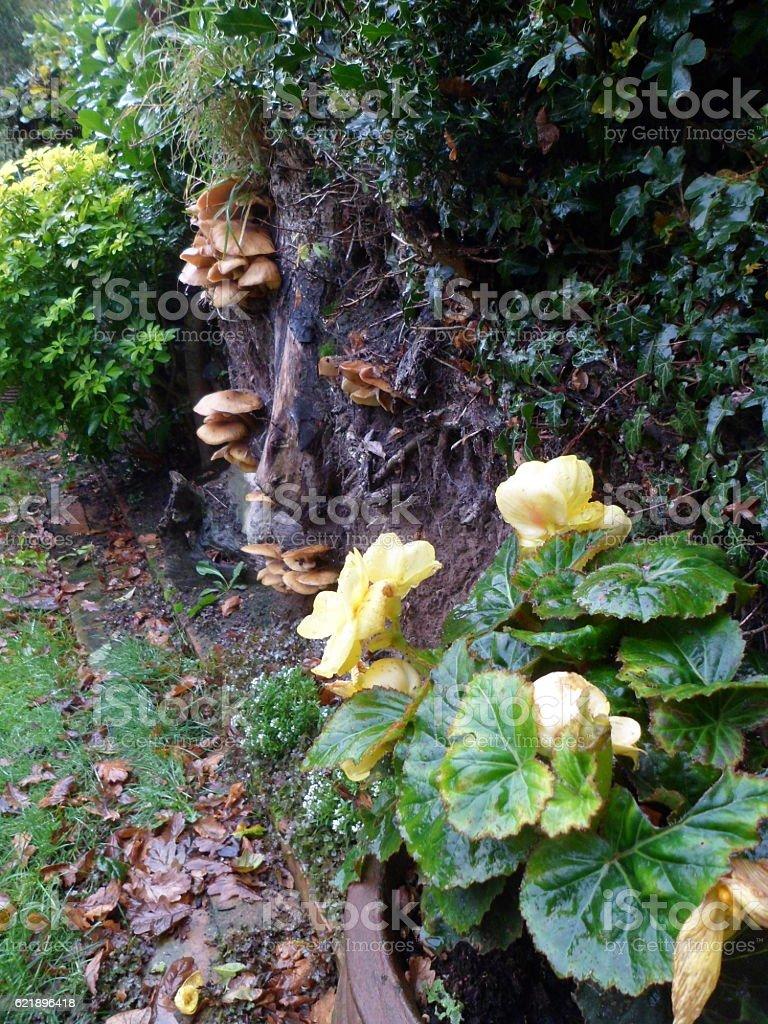 English country garden aspect in Autumn stock photo
