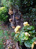 English country garden aspect in Autumn