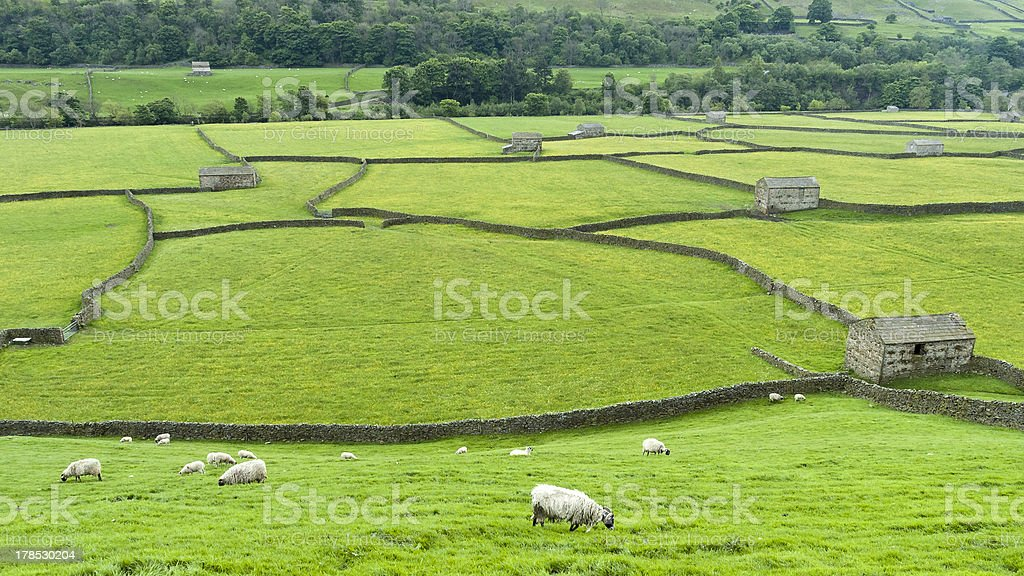 English countryside landscape from Swaledale Yorkshire stock photo