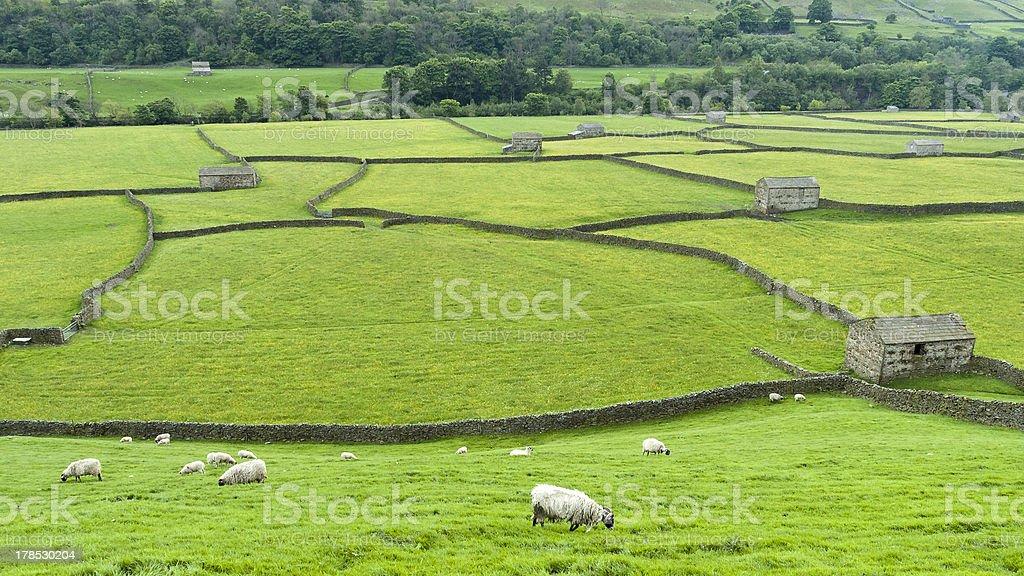 English countryside landscape from Swaledale Yorkshire stock photo
